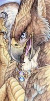 Topaz Gryphon by Goldenwolf