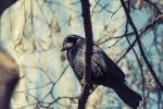 Black birdy is watching you! by gooddy