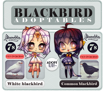 Blackbird Adoptables -CLOSED- by marmolotus-chz