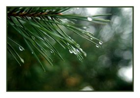 Water on the Pine by jazzkidd