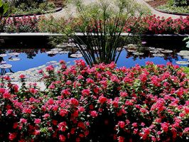 Missouri Botanical Gardens 6 by PridesCrossing