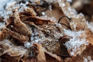 dead leaves and snow by sylvaincollet