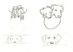 Dog Pictures2 by atnason