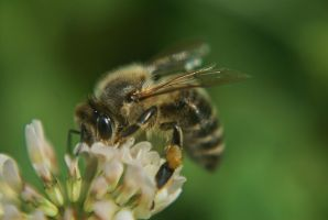 Collecting for honey by SaintWolfOfEden
