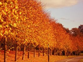 Fifty Shades of Autumn - Street Scene by sexywitchnicki