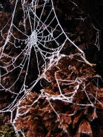 Icy Spiderweb by PoisonGirl-sts