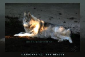 .::Illuminating True Beauty::. by KovoWolf