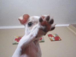 High Paw? by JadeLila