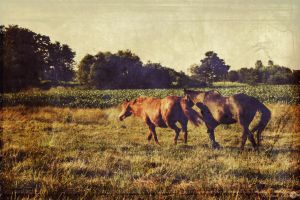 Time Warp- In the Pasture by MariahBlack09