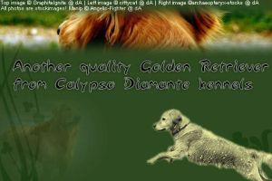 Goldens for Fpaw by Angelic-Fighter
