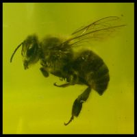 Bee Corpse by soliton