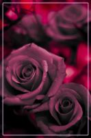 Roses by George-le-meilleur