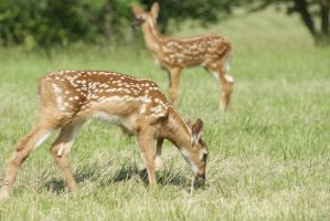 Twin Fawns by Carnage-349