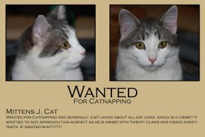 Mittens a Wanted Cat by azieser