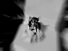 my mini pinscher by H3ECB