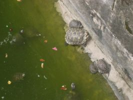 some turtles by Maxustech