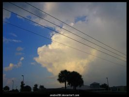 Palm Trees and Powerlines 5508 by anubis281