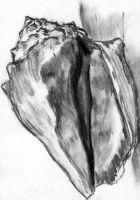 Charcoal Conch by vorbianca