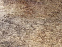 Wood texture 01 by FrostBo