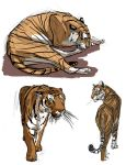 Big Cats Day 1 by Clairictures