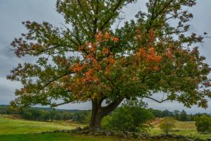 Tree and Battlefield in early Autumn by ENT2PRI9SE