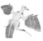 Archaeopteryx literalis by yoult