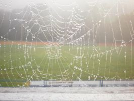 Spider Web 1 by animegrl7979