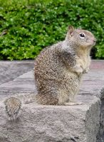 Squirrel Animal Stock Photo by Enchantedgal-Stock