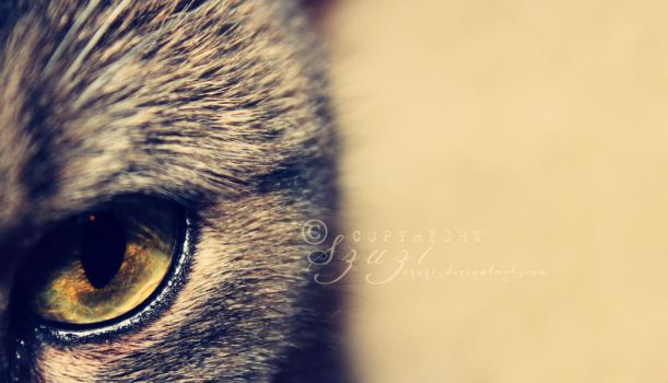 Cat Eye by szuzi