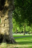 Green grass at London Fields by lulapacefortune