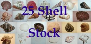 Seashell Stock Pack by Rubyfire14-Stock