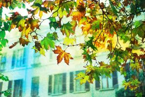 Autumn leaves by MarioDellagiovanna