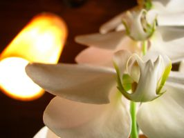 Flower and light by trooper5010