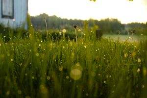 Dewy grass by Beccis1995