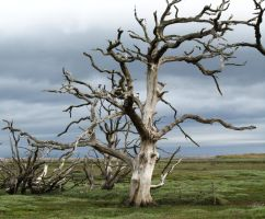 Poisoned tree by jynto