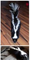 Skunk Soft Mount by DeerfishTaxidermy