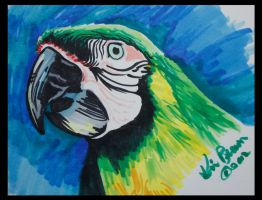 Marker Study - Parrot by PixlPhantasy