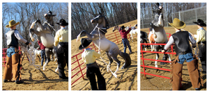 Breyer - Roping The Stallion by The-Toy-Chest