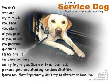 Dodger the Service Dog Educational Poster by bunnybasement
