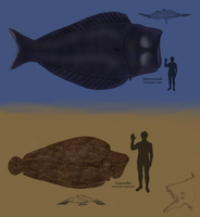 TFiF: Titanic Flatfishes by Dragonthunders