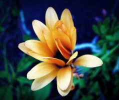 Flower in the Light by sc9