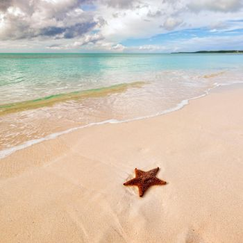 Star of the beach by peterpateman