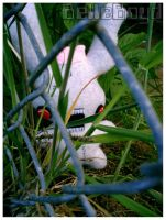 In the Bushes by BelleBoyd