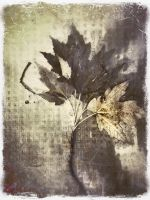 iPhoneography,  Shades of Weathered by Gerald-Bostock