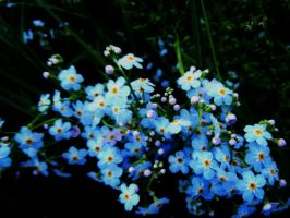 Forget Me Not by Michawolf13
