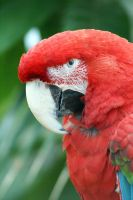 Macaw 002 by MonsterBrand-stock