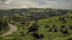 Cows Land by Aneede