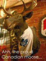 Proud Canadian Moose by I-Am-Canadian-Eh
