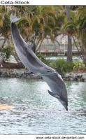 Dolphins 26 by Ceta-Stock