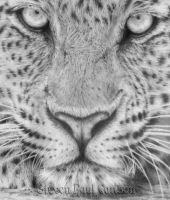 Leopard close-up by spcarlson